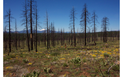 Response of understory vegetation to salvage logging following a high-severity wildfire