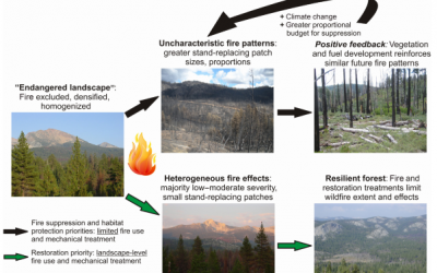 U.S. federal fire and forest policy: emphasizing resilience in dry forests