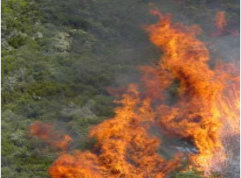 TRADE-OFFS OF REDUCING CHAPARRAL FIRE HAZARD