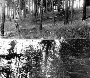Basic principles of forest fuel reduction treatments