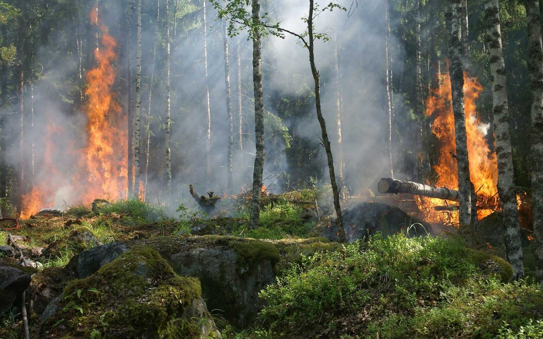 Wildfire Risk to Communities
