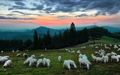 Reducing Wildfire Risk Through Grazing: Find Options In Your Area